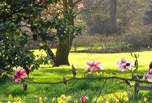 Tavasz-Spring