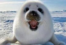 Csodálatos állatok-Animals