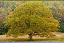 Fák-Trees