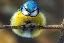 Madárvilág-Bird
