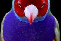 Birds of Australia / Australia, birds, beautiful birds, parrots, Australian birds