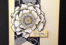 SU : Blended Bloom