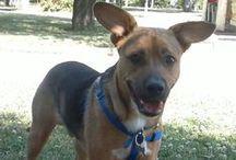 My beautiful dog... Rocky! / I really like dogs, especially this !
