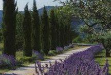 Backyard - Plants (Tuscan)