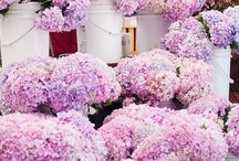 Bold Blooms / a bouquet of colorful blooms to make your day a little brighter.