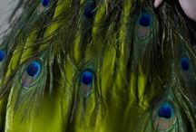 peacock it