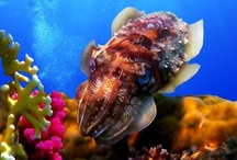 Marine Biology: Sea life  / More than my work: Come with me underwater to learn about the many astonishing marine animals! The perfect board for all sea life lovers and future marine biologists.