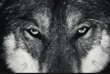 Wolves / Wolves!