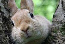 bunnies ^^