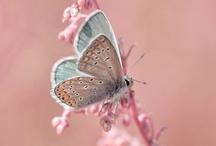 la vida en rosa / los pequeños detalles de la vida, hacen feliz tu existencia........................