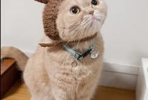 Cat / http://www.seriousmarket.com/