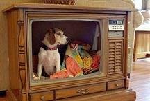 DIY Pet Products
