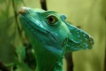 Reptiles, Fish and Other Hairless