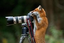 Mammal Portraits
