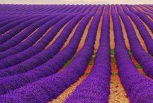 This Purple / Color purple, Colour purple