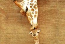 Animals... Beautiful Creatures