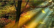 Bright side of Light / sunlight, light, rays, sunbeams