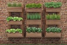 Gardening / Make your neighbors green with envy.