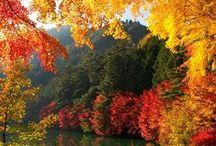 Autumn - Jesień / by Teri P.