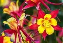 Jardinage: belles plantes, trucs et astuces