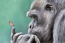 * Primates / Monkeys, apes, etc. / by Marianne Pollard