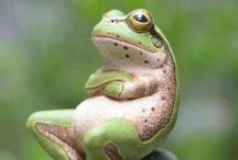 Amphibians & Reptiles / by Marianne Pollard
