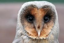Owls Galore!!♥