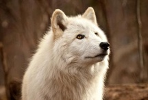 Wolves♥♥♥