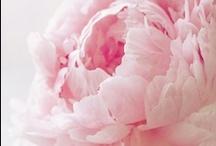 ROSETTES LOVE <3 / DOLLY rosette dresses, shoes,...be romantic!