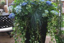 Pot gardens / Pots on balconies