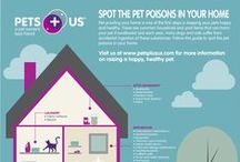 Pet Infographics / Get the latest pet information in fun and creative formats!
