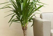 цветы и растения / уход за растениями, дизайн растений