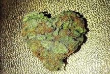 Kush / Weed / Marijuana / I ❤ Sweet Jane ☮
