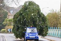 ornaments & trees 1 / by Lynda Ericksen