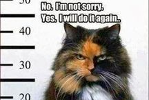 Funny Pet / Funny