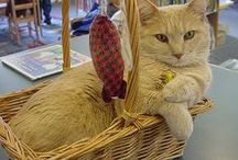 Library Cats / Pins to websites with information about cats in libraries--with a selection of resident cats, current and past, featured.