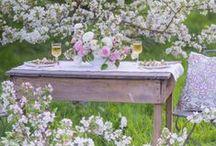 Kert, udvar, terasz - növények / garden, outdoor
