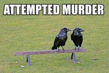 Murder In The First Degree / ς๏гשยร ๑ ς๏гคჯ   / by Stacey McAfee