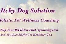 Healthy Pets / How to keep your pets healthy