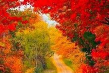 Nature / Beautiful pictures of nature scenes, many fall leaves