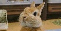 Bunnies / Sweetest animal i know.