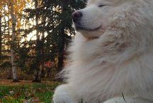 cute - dog / makes my heart melt