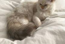 cute - cat / i need a cuddly animal.