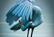 Birds Make My Heart Soar / by Margie Deeb