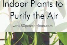 Garden / Inspiration to create your garden paradise and grow organically.
