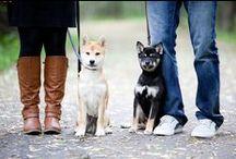 The Pups / A photo timeline of our Shiba Inu pups. Meet Roxy and Riley. #shibainu #puppies #doge #shiba