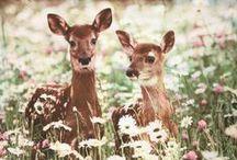 Rådjur och hjortar