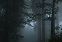 The beautiful dark forest