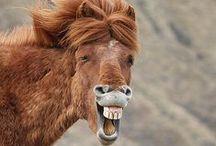 Roliga hästbilder