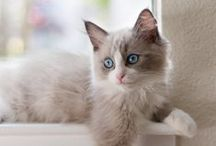 Window Cats